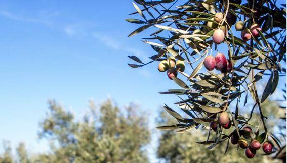 Aceite de oliva Hacendado 100% español