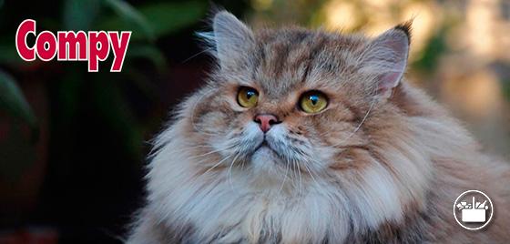 Pienso Compy para gatos obesos