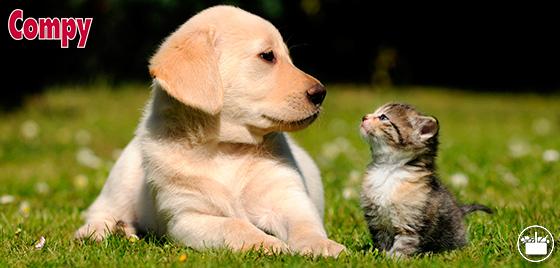 Vitaminas en pienso compy para perros y gatos