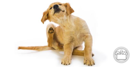 Collar y pipetas para perro de Mercadona