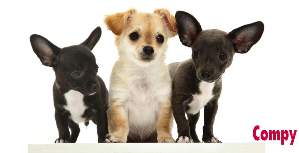 cachorros de razas pequeñas