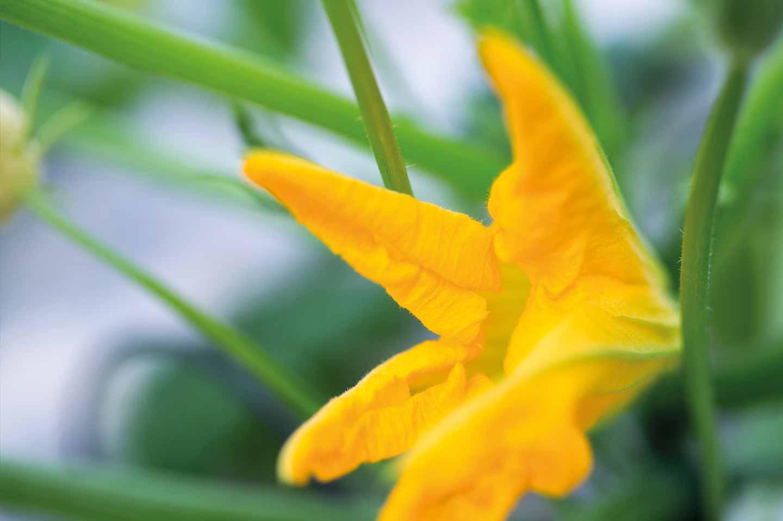 Flor amarilla. El Proveedor